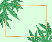 Marijuana cannabis weed leaf with gold frame background -vector