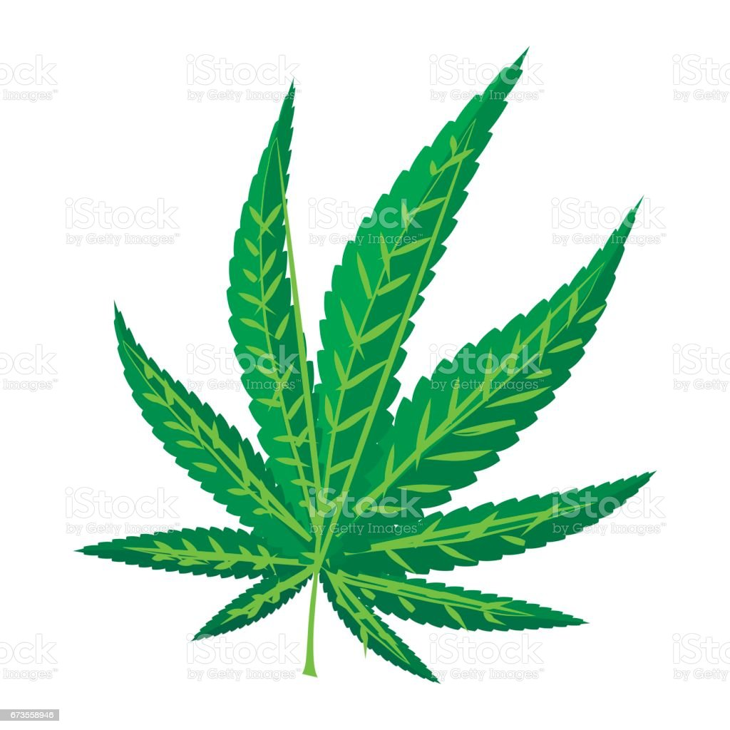 Marijuana leaf icon, cartoon style royalty-free marijuana leaf icon cartoon style stock vector art & more images of addiction
