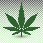 Marijuana leaf on transparent background in vector format