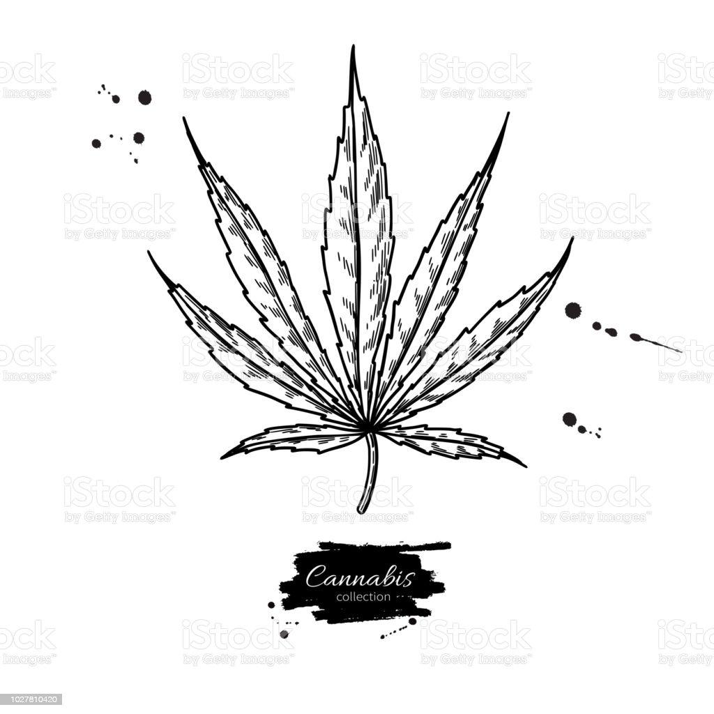 La Marijuana Feuille Dessin Vectoriel Illustration Botanique De