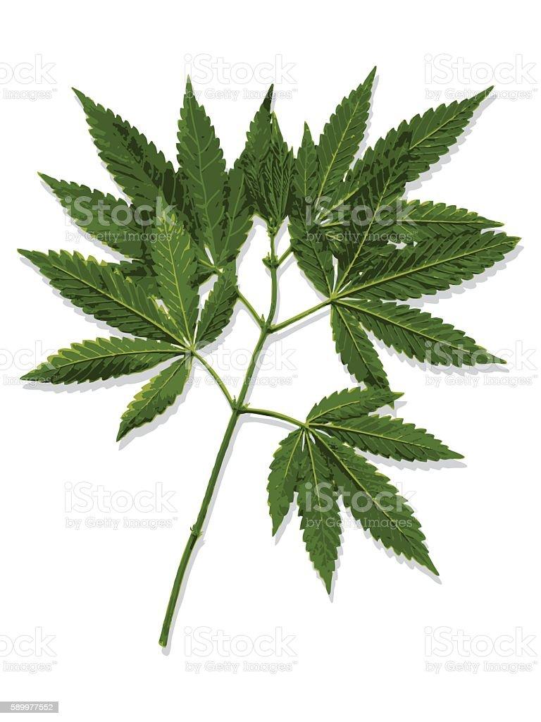Marijuana Leaves Cannabis Stock Vector Art & More Images of