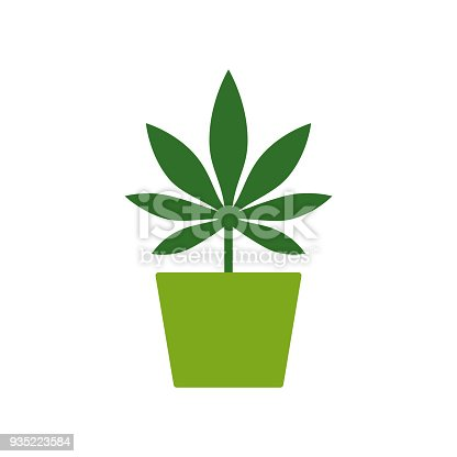 Marihuana Oder Cannabis Pflanze In Einen Blumentopf Anbau Von ...