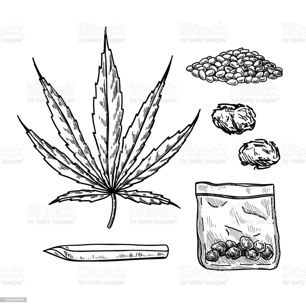 La Marijuana Ou Du Cannabis Dessin Vectoriel Ensemble Planter Des