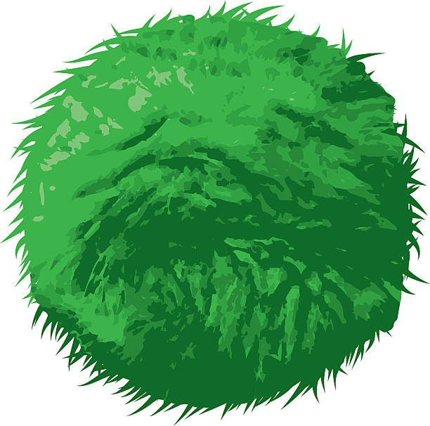 Marimo (Aegagropila linnaei), Japanese Seaweed Ball An illustration of the 'Marimo', a type of green algae that grows in a ball shape found in countries such as Japan, Australia, Iceland and Scotland. Download includes AI10 EPS and a high resolution JPEG. moss stock illustrations