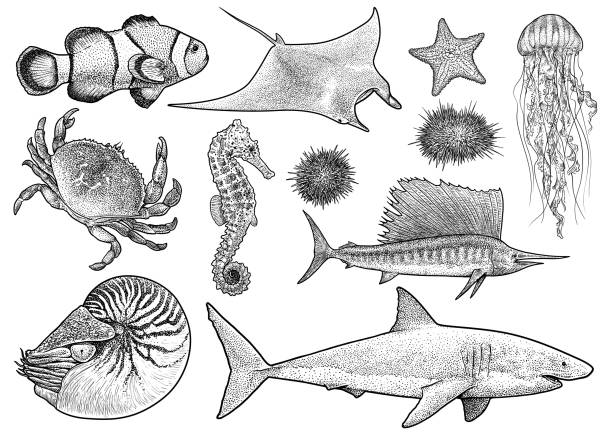 Marine animals collection illustration, drawing, engraving, ink, line   art, vector Illustration, what made by ink, then it was digitalized. nautilus shell stock illustrations