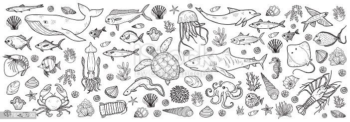 Banner with cute hand drawn marine animals, fish and shells. Vector illustration.  May use as coloring page.