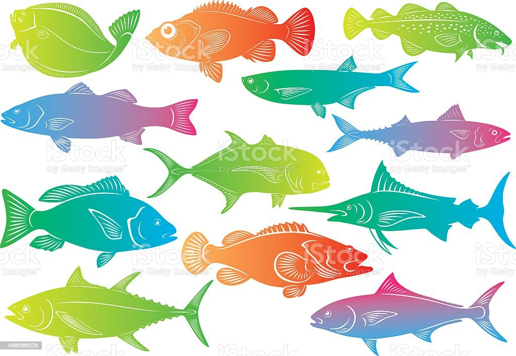 marine fish vector art illustration