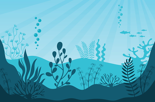 Marine life. Beautiful marine ecosystem