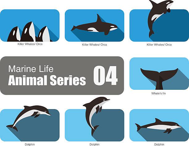 Marine life cartoon collection, vector Marine life cartoon collection, vector, killer whale, orca, dolphin killer whale stock illustrations