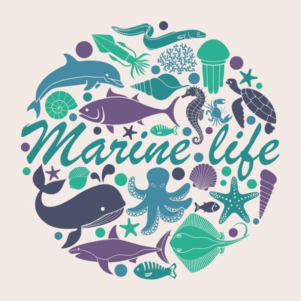 Marine life icons in the form of a circle vector art illustration