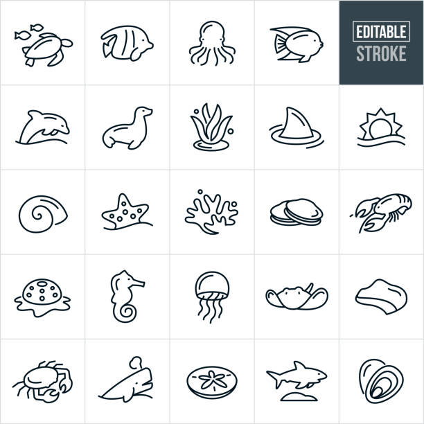 Marine Life Thin Line Icons - Editable Stroke A set of marine life icons that include editable strokes or outlines using the EPS vector file. The icons include a sea turtle, tropical fish, octopus, dolphin, sea lion, seal, seaweed, shark, sun over ocean, sea urchin, starfish, coral, clams, lobster, snail, seashell, sea horse, jellyfish, sting ray, coastline, crab, whale, sand dollar and oysters. marine life stock illustrations