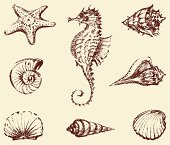 Vector drawings of a different sea creatures.