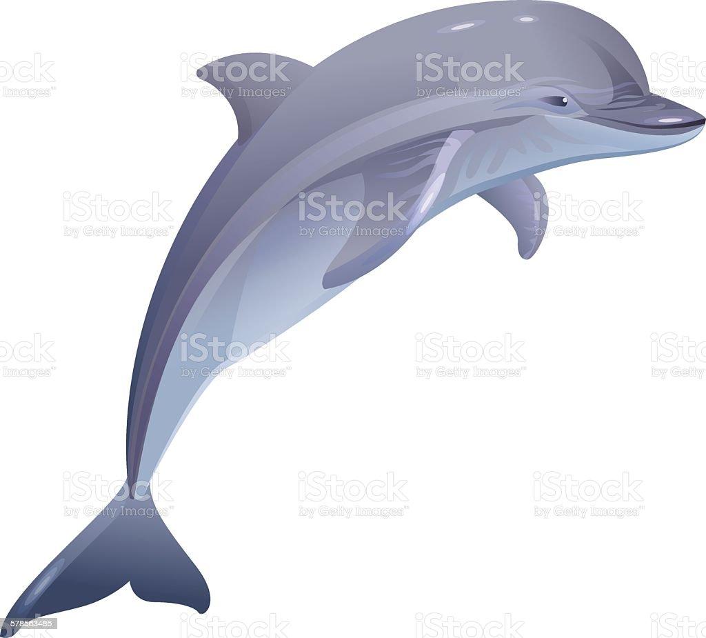 Marine mammal dolphin