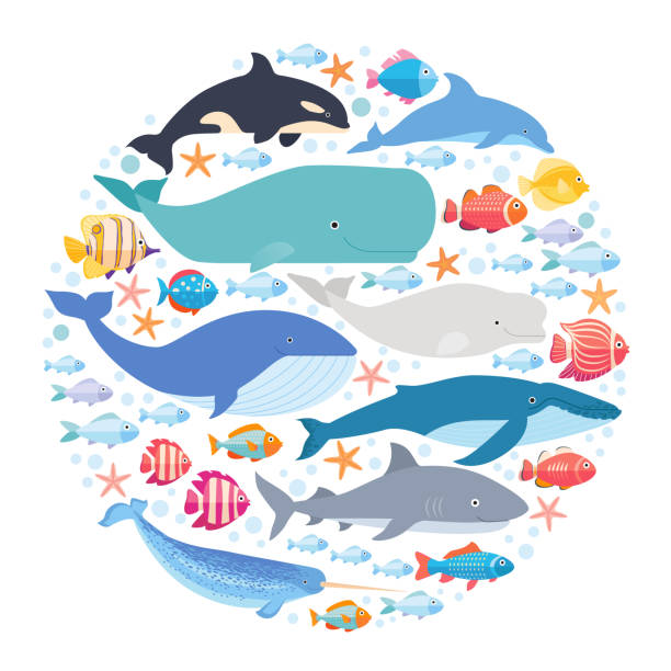 Marine mammals and fishes set in circle. Narwhal, blue whale, dolphin, beluga whale, humpback whale, bowhead and sperm whale vector isolated Marine mammals and fishes set in circle. Narwhal, blue whale, dolphin, beluga whale, humpback whale, bowhead and sperm whale vector on white isolated beluga whale stock illustrations