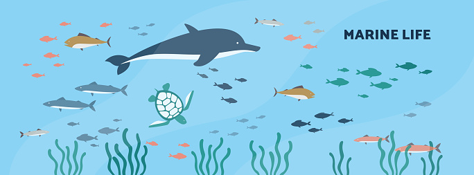 Marine or underwater background with seabed animals flat vector illustration.