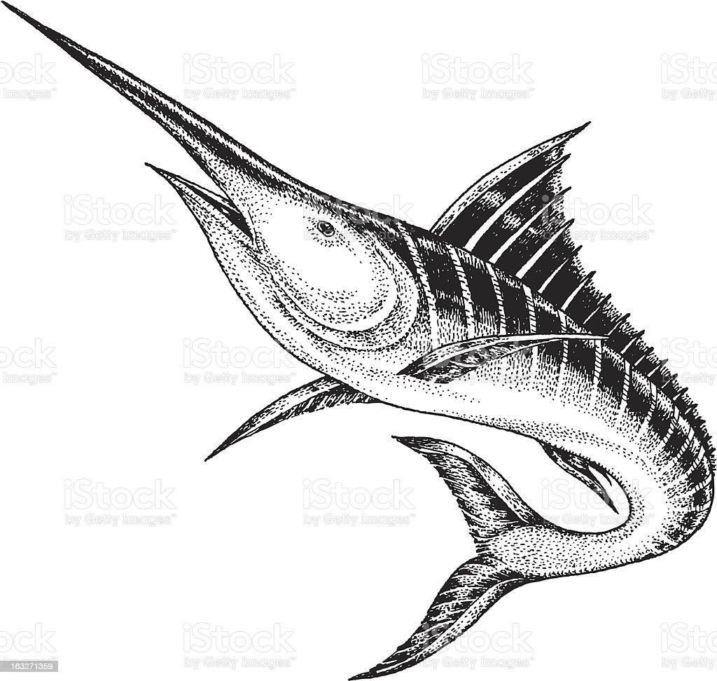 Marlin vector art illustration