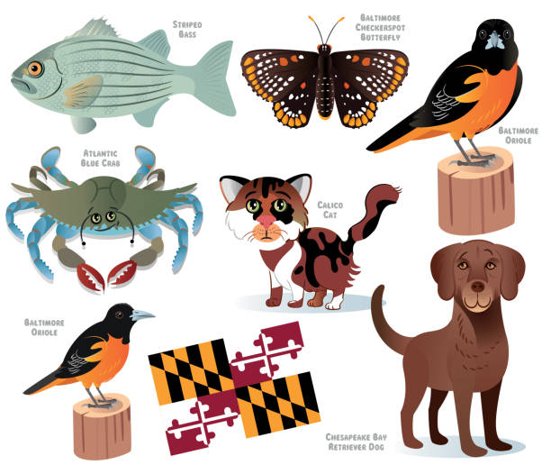 Maryland State Animals vector art illustration