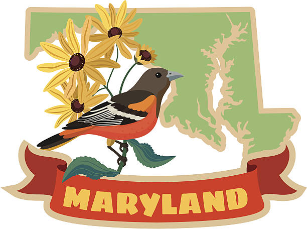 Maryland state bird and flower vector art illustration