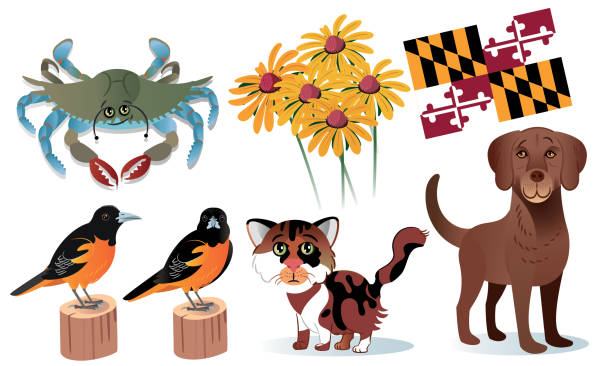 Maryland State Symbols vector art illustration