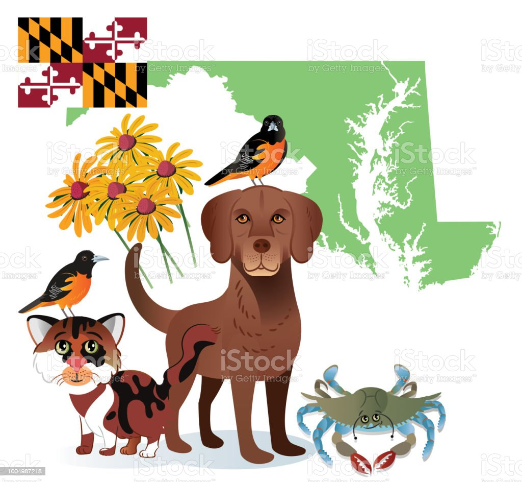 Maryland State vector art illustration