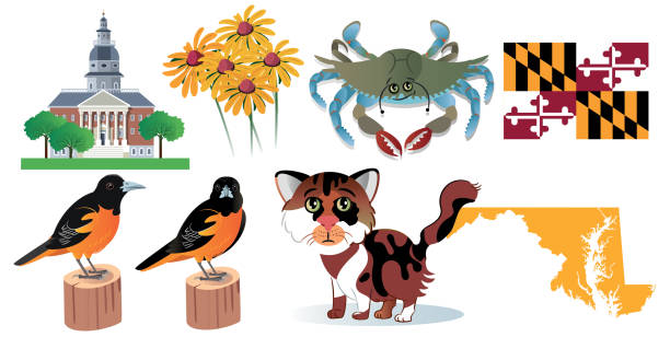 stockillustraties, clipart, cartoons en iconen met maryland symbolen - blauwe zwemkrab