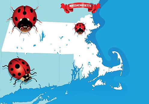Massachusetts and Ladybug Beetle