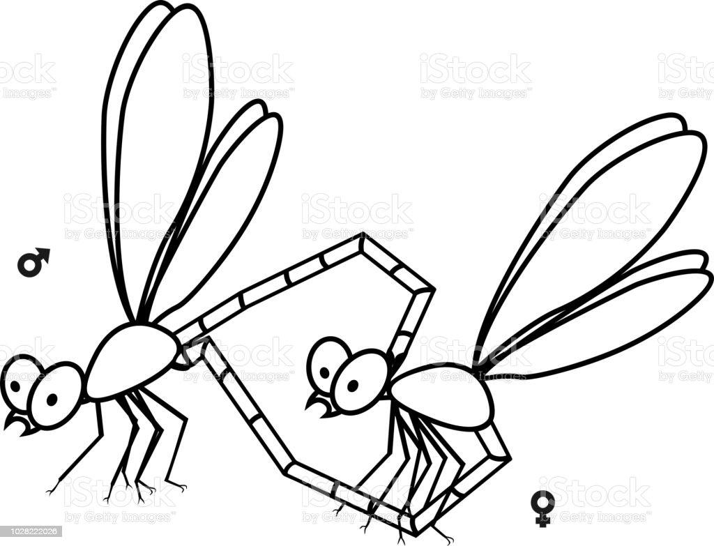 Paarung Paar Libellen Malvorlagen Stock Vektor Art Und Mehr Bilder