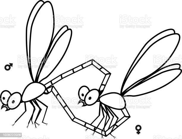 Mating couple of dragonflies coloring page vector id1028222026?b=1&k=6&m=1028222026&s=612x612&h=vmufzy iafnlwjmftjcxa1purpukeqdoruxlbaoxsi0=