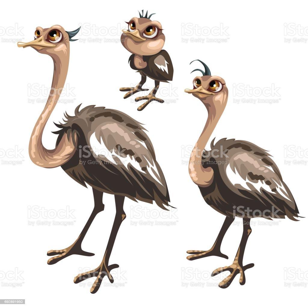 Estágios de maturação da avestruz, fases de crescimento - ilustração de arte em vetor