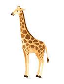 istock Mature giraffe african animal with long neck cartoon animal design flat vector illustration isolated on white background 1283745365