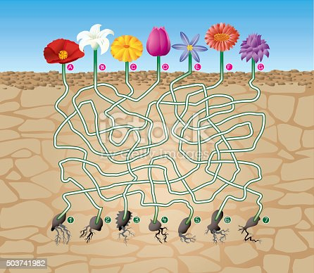 Vector illustration of maze (labyrinth) game with cute cartoon flowers and respective seeds