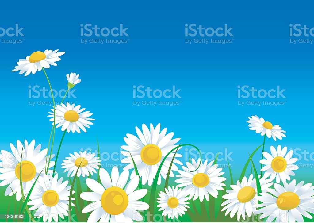 A meadow full of animated daisies that are vivid in color vector art illustration
