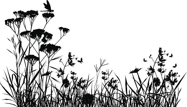 stockillustraties, clipart, cartoons en iconen met meadow silhouette - grassenfamilie