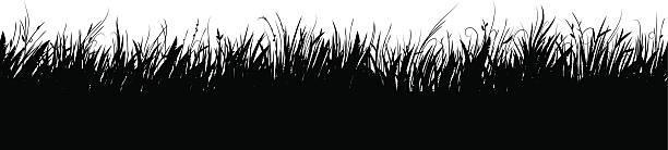 Meadow – Vektorgrafik