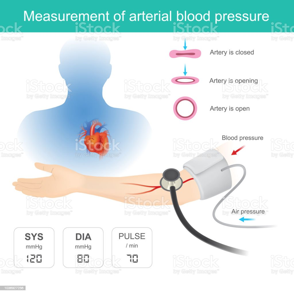 Measurement of arterial blood pressure vector art illustration