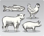 Meat Animals