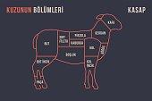Meat cuts. Poster Butcher diagram and scheme - Lamb