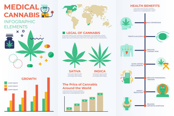 Medical cannabis infographic elements vector art illustration