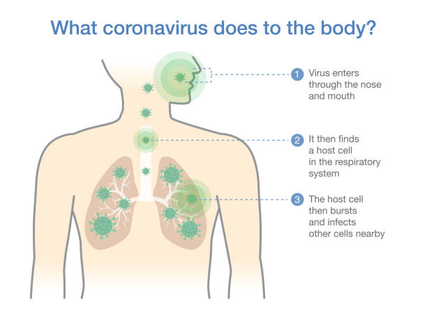 Medical diagram for explain about what coronavirus does to the body. Illustration about Covid-19 disease. vector art illustration