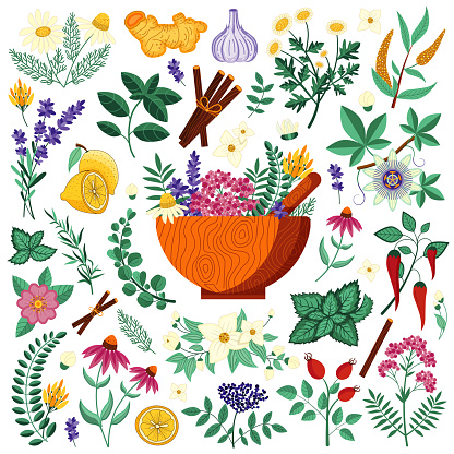 Medical Herbs and Homeopathic Heeling Plants