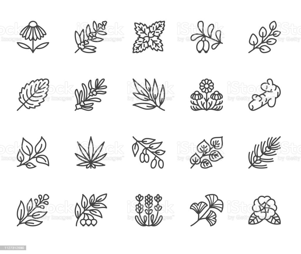 Medical herbs flat line icons. Medicinal plants echinacea, melissa, eucalyptus, goji berry, basil, ginger root, thyme, chamomile. Thin signs for herbal medicine. Pixel perfect 64x64 Editable Strokes Medical herbs flat line icons. Medicinal plants echinacea, melissa, eucalyptus, goji berry, basil, ginger root, thyme, chamomile. Thin signs for herbal medicine. Pixel perfect 64x64. Editable Strokes Basil stock vector