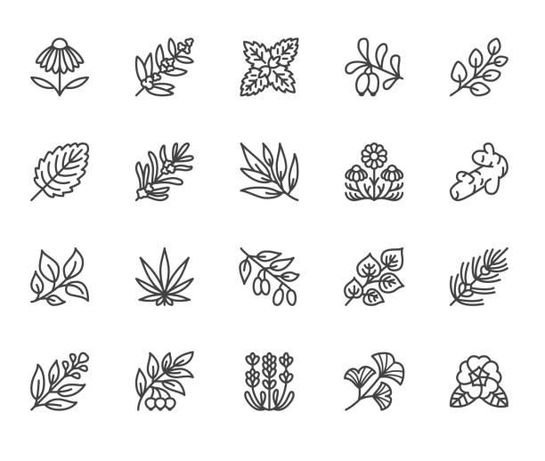 zioła medyczne płaskie ikony linii. rośliny lecznicze echinacea, melissa, eukaliptus, jagoda goji, bazylia, korzeń imbiru, tymianek, rumianek. cienkie objawy dla medycyny ziołowej. pixel doskonały 64x64 edytowalne obrysy - lekarstwo stock illustrations