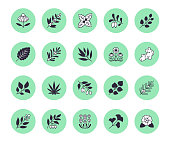 Medical herbs flat line icons. Medicinal plants echinacea, melissa, eucalyptus, goji berry, basil, ginger root, thyme, chamomile. Silhouette signs for herbal medicine.