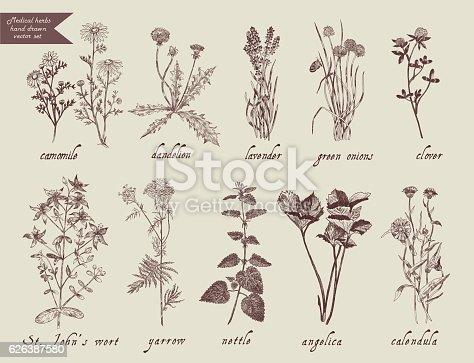 Medical herbs set. Hand drawn design. Vector