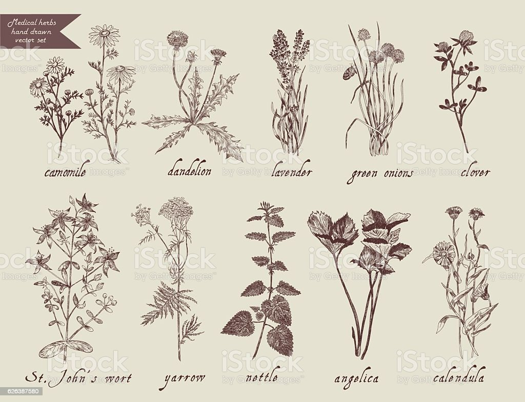 Medical herbs set. Hand drawn design. - ilustración de arte vectorial