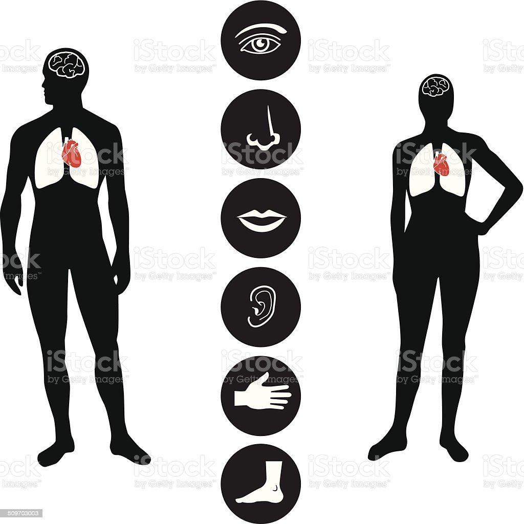 Medical Human body part icon vector art illustration