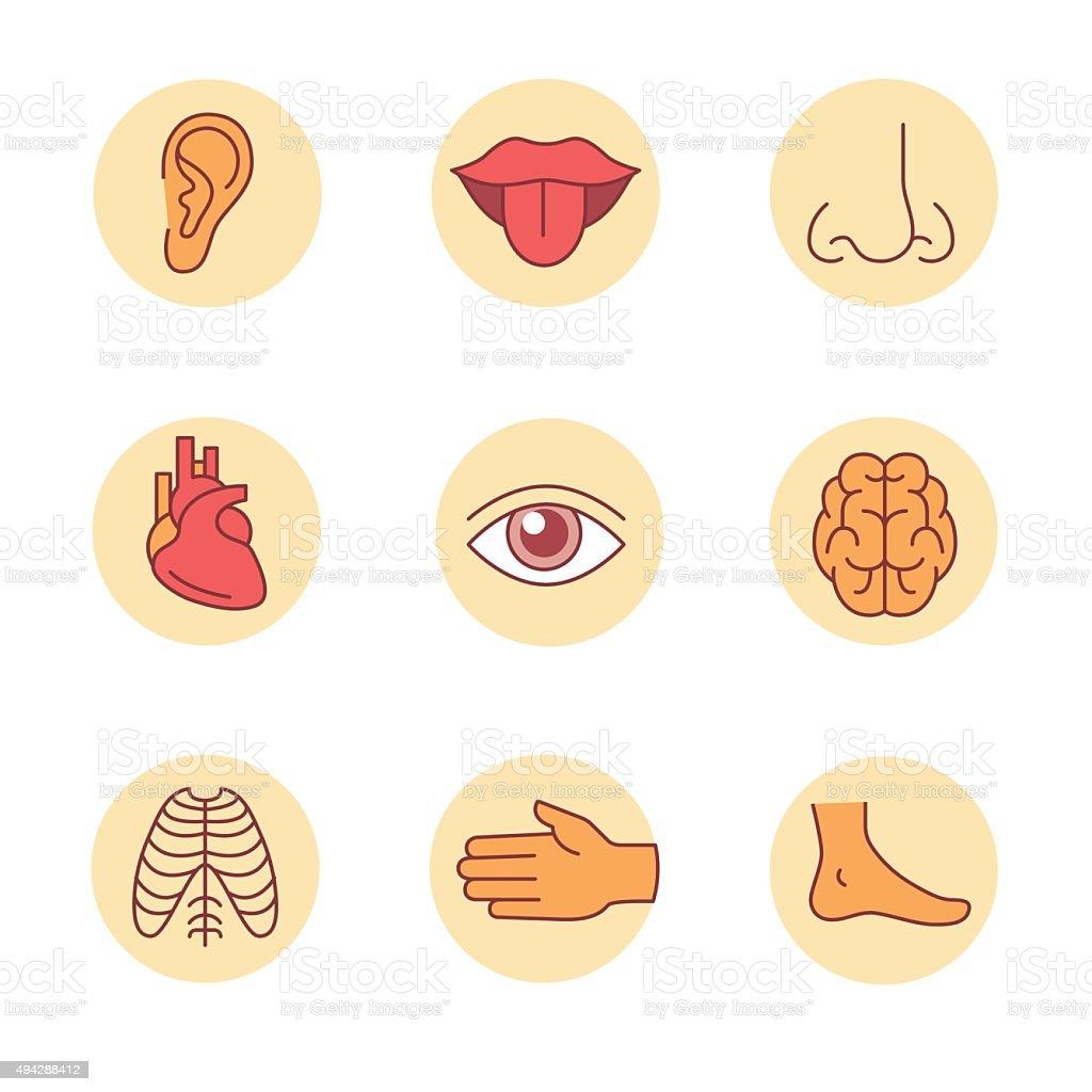 Medizinische Symbole Menschlichen Organen Und Körperteilen Stock ...