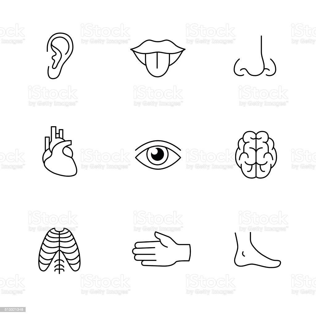 Medical icons thin line art set. Human organs vector art illustration