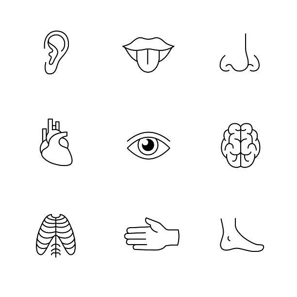 stockillustraties, clipart, cartoons en iconen met medical icons thin line art set. human organs - tasting