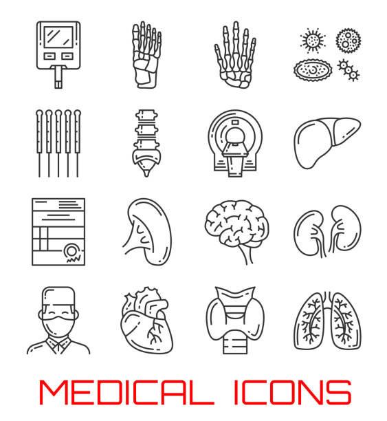 medical icons with human organs and doctor - thin line icons stock illustrations, clip art, cartoons, & icons